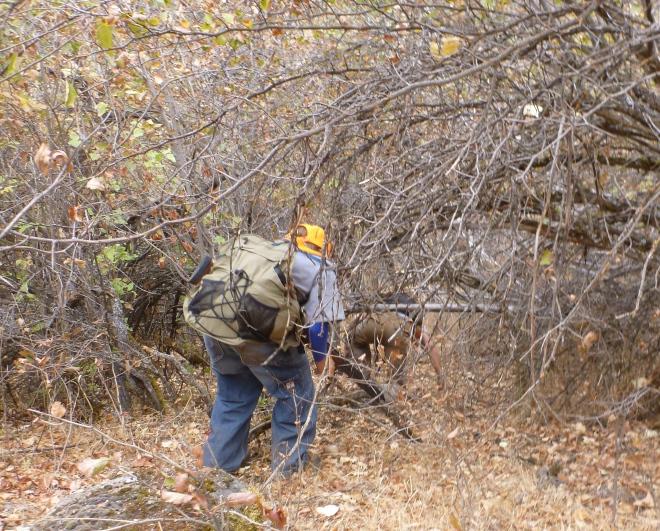We crawled under plenty of thicket.