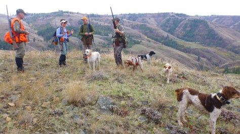 Plenty of dog action: the four Brittanys on the right are all from Sunburst Kennels in Emmett, Idaho